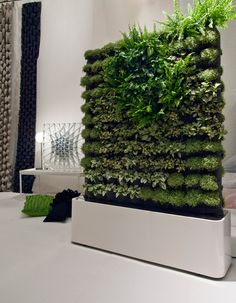 With the increase in the trend of vertical garden in home decoration, moss wall art and graffiti are also favored. Vertical gardens & moss walls are the best home decoration trick to turn out your home into a miniature farm. Vertical Plant Wall, Vertical Garden Design, Vertical Gardens, Vertical Planter, Moss Wall Art, Moss Art, Diy Room Divider, Room Dividers, Divider Ideas