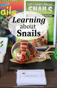 Suzie's Home Education Ideas: Hands-on Learning about Snails - books, Montessori cards, 4D snail anatomy model and how this interest was supported.