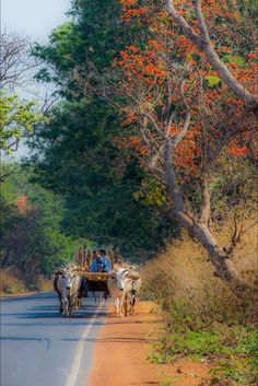 India's Hinterland.