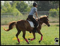 Houston SPCA: Houston SPCA Horse Adoption Page