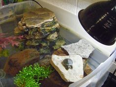 Loving Life Science ... Miss A's Biology Blog-50 gallon rubbermaid stock tank idea