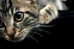 petit chat chou