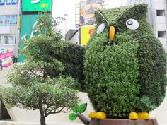 Topiary Owl. Found on: http://www.latte.ca/pics/2011/0704 / #GreenDreams / #Topiary