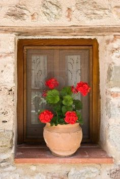 Etched glass and Geraniums