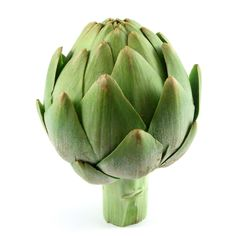 """Artichoke - Artichokes are considered to be one of the superfoods of nature primarily because of their nutritional value and health benefits. Although, they look unusual, they have been cultivated for a very long time. The leaves and the bud (which is called the hearth of the artichoke) are both edible. As you eatyour way through the outer leaves and get closer to the center, the leaves have more tender """"meat"""" on the bottom. Learn all about Artichokes and their"""