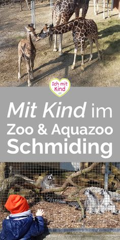 Unterwegs mit Kind im #Zoo und #Aquazoo Schmiding Movie Posters, Movies, Travelling With Toddlers, Zoological Garden, Kids Fun, 2016 Movies, Film Poster, Films, Popcorn Posters