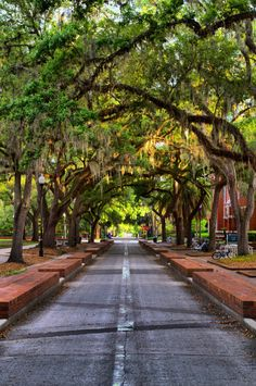 A canopy of trees along the walkway on the University of Florida campus. Photo by Chris Bastian.