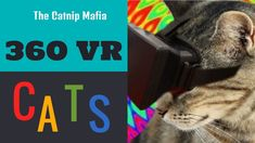 Vr Kittens - 360 Cats Video - 360 Kittens - Vr Cats - Best 360 Cats - 36... Funny Cat Videos, Funny Cats, Youtube Cats, Right Meow, Cat Behavior, Cat Gif, Vr, Kittens, Cute Kittens