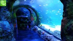 Sea Life Aquarium Great Lakes