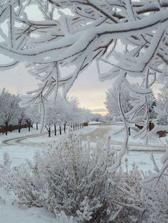 I love Winter Wonderland Winter Szenen, I Love Winter, Winter Magic, Winter White, Winter Walk, Winter Trees, Snowy Trees, Winter Holiday, Snow White
