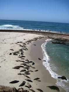 Seal Beach in La Jolla (San Diego, California)<3