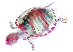 Iori Tomita   New World Transparent Specimens inspiration