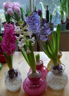 Hyacinth Vases  really interesting blog about forcing bulbs......  and these vases would be great gift ideas..... might have to go surf ebay now :)