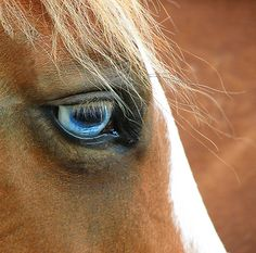 One of the prettiest things i've ever seen in my life!! I don't know what it is about horses with blue eyes.. but i fall in love with every single one of them!