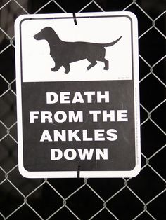 Haha need one with a jack Russell on it cuz sally will kill all the toes and maybe a knee cap lol
