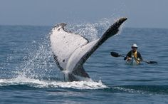 Maui...whale watching tour for sure!!