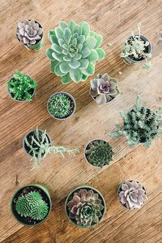 How To: Succulent Arrangements on Waiting on Martha #succulent @arrangements #howto