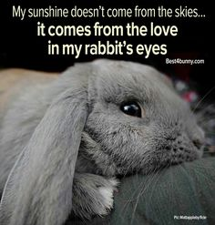 The love of a bunny