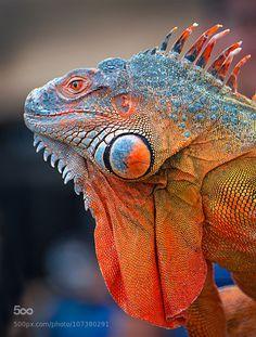 """"""" iguana by tamduy http://ift.tt/1EORMQK """""""