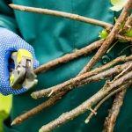 Zahradníkův kalendář na celý rok: kdy sít a sázet zeleninu, květiny, dřeviny? - Užitková zahrada Parrot, Bird, Animals, Parrot Bird, Animales, Animaux, Birds, Animal, Animais