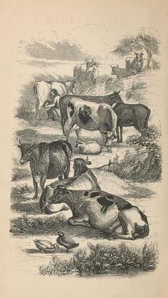The most amazing cow drawing ever