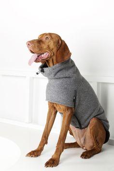 Vizsla wearing a coat Pet Dogs, Dogs And Puppies, Pets, Wirehaired Vizsla, Hungarian Vizsla, Dog Clothes Patterns, Dog Jacket, Pet Clothes, Dog Clothing