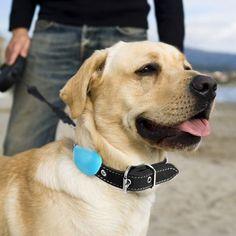 Hachiko Smart Dog Sensor #Dog, #Sensor, #Smart