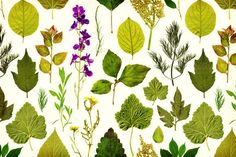 Check out Vintage herbarium seamless pattern by Markovka on Creative Market