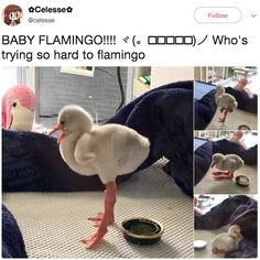 """21 Wholesome Animal Tweets That Will Make You Say, """"I'm Not Crying, YOU'RE Crying"""""""
