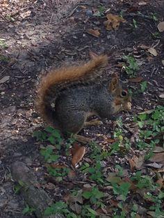 My nutty little friend
