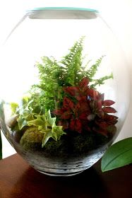 Today I'd like to give you a small update on my plant terrariums (you can read the original post here ). The big fern bowl looks ju...