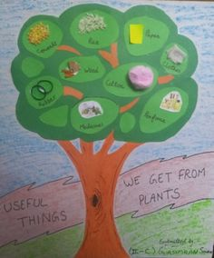 Things we get from plant art idea samarpeet Worksheets For Kids, Lkg Worksheets, Activities For Kids, Science Fair, Science Lessons, Trees For Kids, Diy And Crafts, Crafts For Kids, Planting For Kids