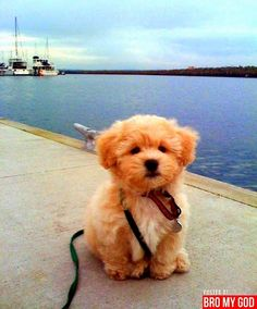 The Pet's Blog: Top 10 Most Lovable Dogs in the World