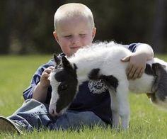 Kleinstes Pferd der Welt liebt Streicheleinheiten