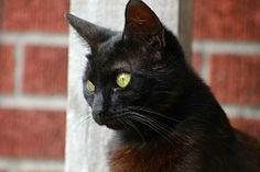 Kissa, Eläinten, Silmät, Kissaeläin