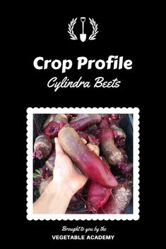 Take your vegetable game to the next level with professional advice and the support of a like minded community. Online Classroom, Seed Catalogs, Grow Your Own Food, The Hard Way, Fresh Vegetables, Beets, Grocery Store, Gardening Tips, Profile