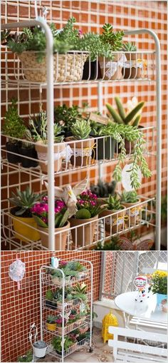 Wire standing rack for herb plants and small vege plants