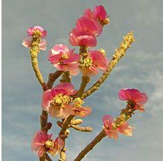 Flores silvestres de Israel