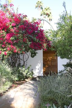 Bougainvillea / Parker Palm Springs Source by xdx Bougainvillea, Mexican Garden, Parker Palm Springs, Gate Design, Front Yard Landscaping, Courtyard Landscaping, Garden Gates, Spanish Style, Spring Garden