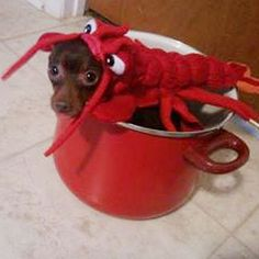 Lobster - Pet Halloween Costumes - Southern Living...If Carson doesn't have to walk Andi on a leash, he could maybe carry her in a pot...
