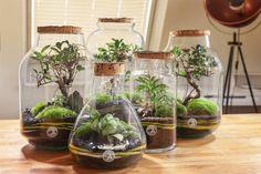 Closed Terrarium Plants, Small Terrarium, How To Make Terrariums, Moss Terrarium, Compost, Fresco, Moss Garden, Bottle Garden, Ficus