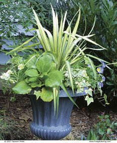 These survivors can stay in pots for years, lending consistency to your designs