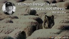 """Human Design is for wolves, not sheep.""   - Ra Uru Hu"