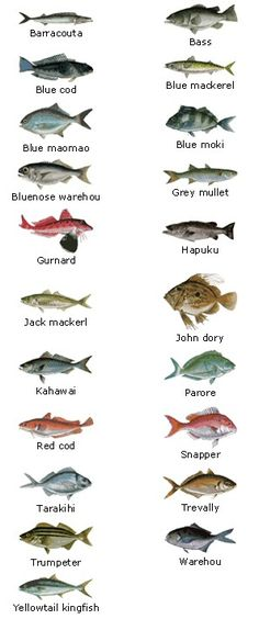 Different fish, including ones you catch.