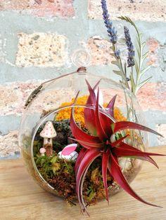 tillandsien moos arrangement pflanzen figuren