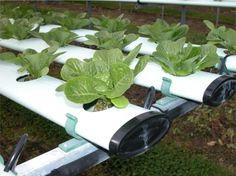 وبلاگ تخصصی باغبانی - کشت هیدروپونیک چیست؟