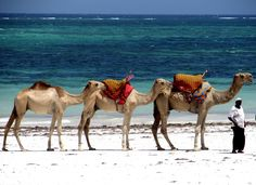 """The water looks just like I remember - beautiful.""""Camel ride on the beach in Mombasa, Kenya"""" Submitted by Johanny R. Still got a picture of me riding on a camel in this beach. Kenya Travel, Africa Travel, Places To Travel, Places To See, Mombasa, Out Of Africa, Beautiful Dream, African Safari, Beautiful Beaches"""