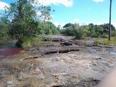 Formaciones rocosas y algas de colores
