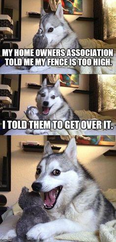 #PunHusky... Beware of Dog.