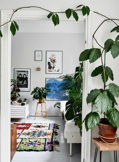 Interior trend alert: boucherouite rugs cosy дом, интерьер и Indoor Garden, Indoor Plants, Home And Garden, Garden Living, Indoor Plant Wall, Hanging Plants, Faux Philodendron, Plantas Indoor, Turbulence Deco